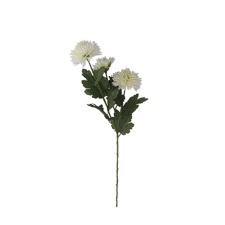 Ramo de Crisantemo Blanca.